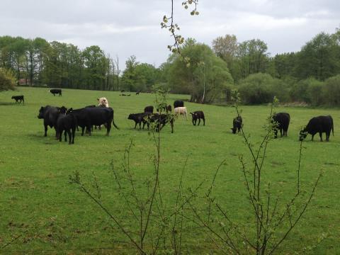 Farma Naděje: Naděje pro zvířata i lidi - pastva