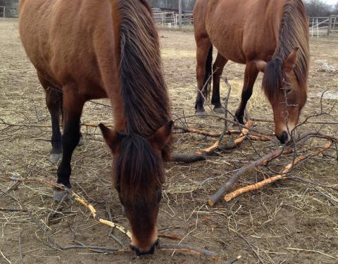 Farma Naděje: Naděje pro zvířata i lidi - koně