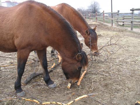 Farma Naděje: Naděje pro zvířata i lidi - Koně -Toulcův dvůr