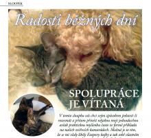 SLOUPEK: Radosti běžných dní a soutěž pro čtenáře